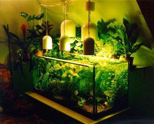 mein aquarium gesellschaftbecken. Black Bedroom Furniture Sets. Home Design Ideas